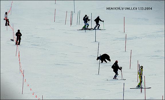 Bear Skier