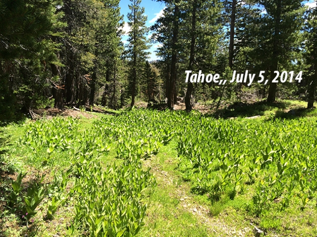 Tahoe Hiking July2014