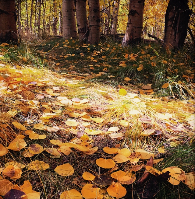 Carpeted-in-aspen-HopeValley