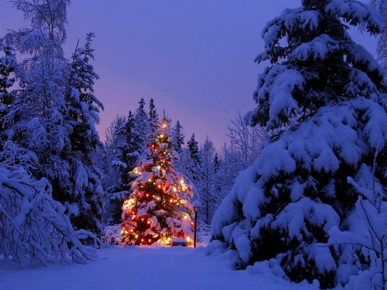 snowymeadowtahoe